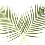 Palm Sunday Evening Service
